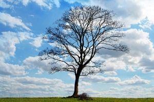 Baum mit Krone