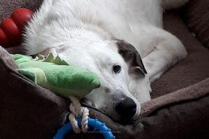 Maila Hund