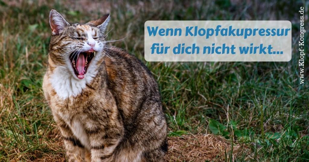www.klopf-kongress.de